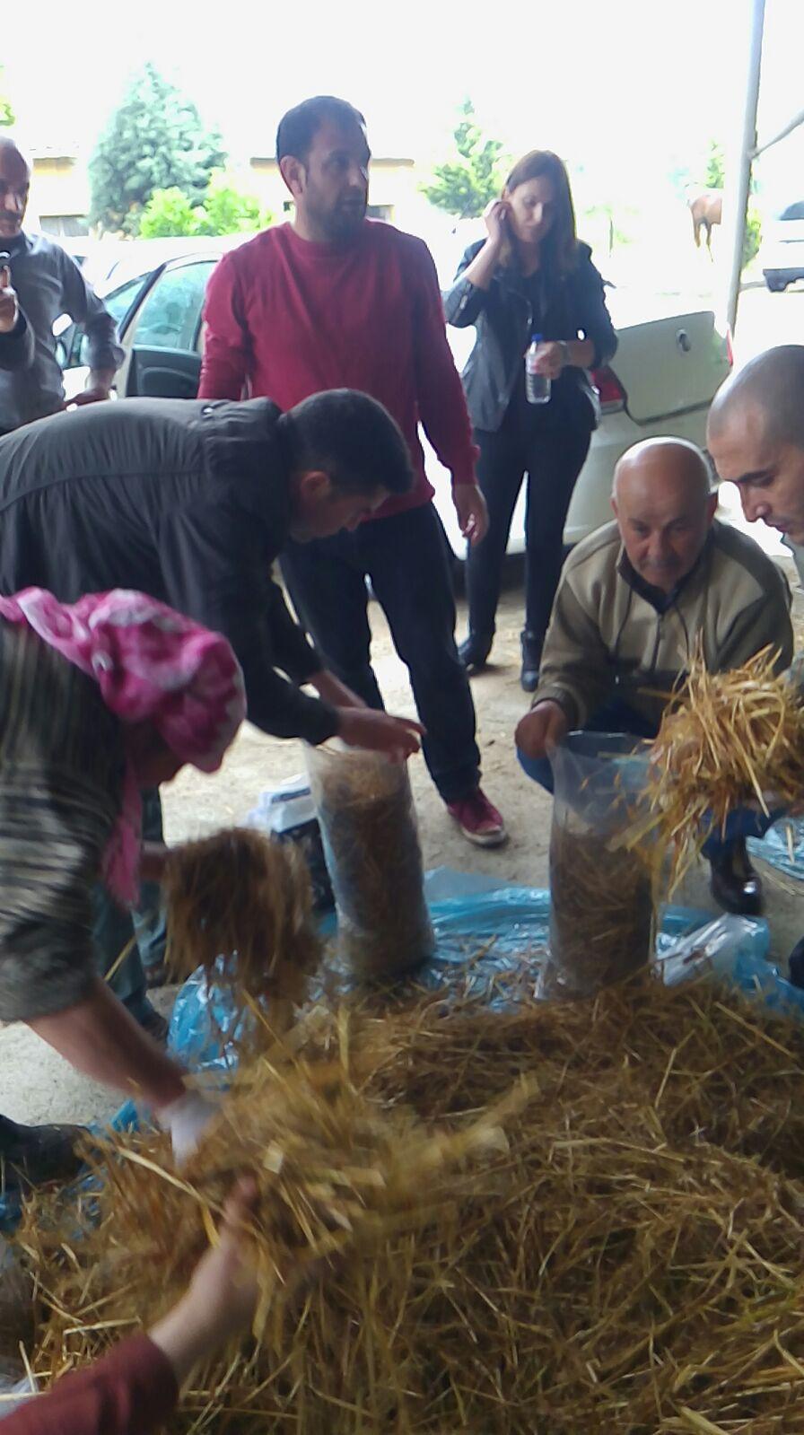 KO-MEK'le mantar yetiştirmeyi öğreniyorlar
