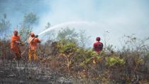 Kocaeli'de 20 dönümlük ormanlık alan kül oldu