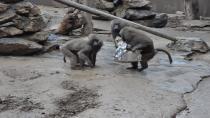 Hayvanat bahçesi sakinlerine yılbaşı hediyesi