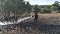 Boş arazide çıkan yangın zeytin ağaçlarına sıçradı