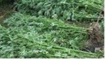 Kocaeli'nin bir aylık uyuşturucu raporu açıklandı