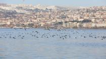 Kuşların yeni cenneti ''Kocaeli''