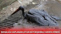 Bataklığa saplanan leylek Büyükşehirle hayata döndü