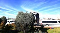 Gebze'de ağaçların bahar bakımı